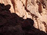 Josh Case | Grand Canyon