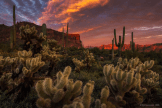 Peter James Nature Photography | Superstition Wilderness