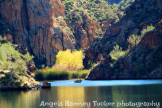 Angela Ramsey Tucker | Saguaro Lake