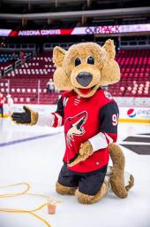 Guest Editorial: Remember When the Coyotes Considered Playing Games in Saskatoon? Don't Rule Out a Fresh Round of Coyotes Chatter with New Owner & MLB Rays Pondering Home Games in Montreal