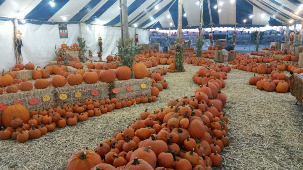 Gilbert Farm Pumpkin Patch Free Admission