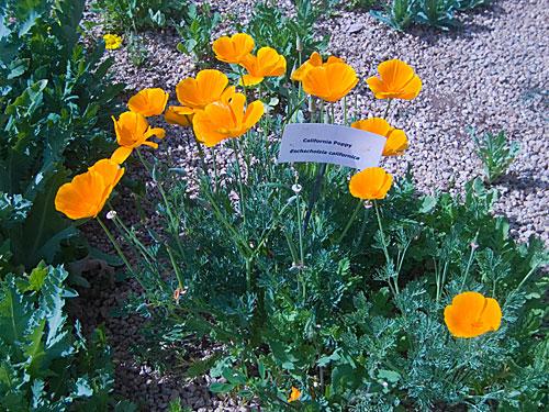 garden_tour_house_3_poppy.jpg