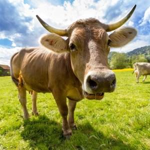 Sürdürülebilir Tarım Nedir? Neden Önemlidir?, Sürdürülebilir Tarım İhtiyacı