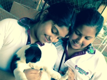Crawford Preparatory students visit Ark Animal Puppy Shelter