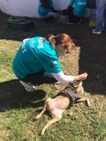 FNB outreach to Ark Animal Puppy Shelter 009