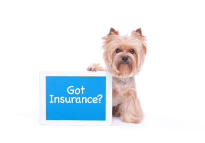 Image result for dog insurance