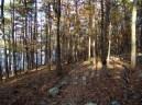 Lake Ouachita: Caddo Bend Trail - 4mi photo