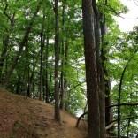 Falls Branch Trail, next to the lake, heading back toward the trailhead
