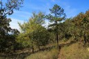 Ouachita Trail 01: Potato Hill Vista Spur to FR 6010 (2.4 to 5.8) photo