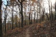 Ouachita Trail 01: Pics of Horsethief Springs to FR 6014 (19.9 – 21.7) photo