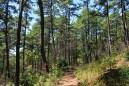 Ouachita Trail 01: Talimena S.P. to Potato Hill Vista (0.0 to 2.4) photo