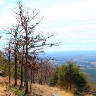 Rim Trail, Mount Nebo State Park
