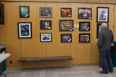 Arlington Camera Club on display