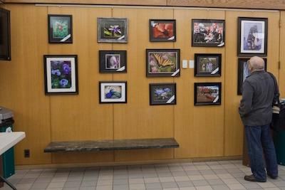 Arlington Camera Club on display