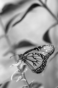 Butterfly - Bill Heider