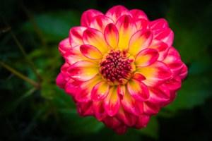 Dew on Flower - Bill Heider