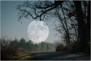 Joanne Barsanti - Full Moon at Meacham Grove