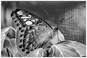 Bill Heider - Butterfly