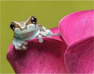 """Ken Olsen - """"Milk Frog"""""""