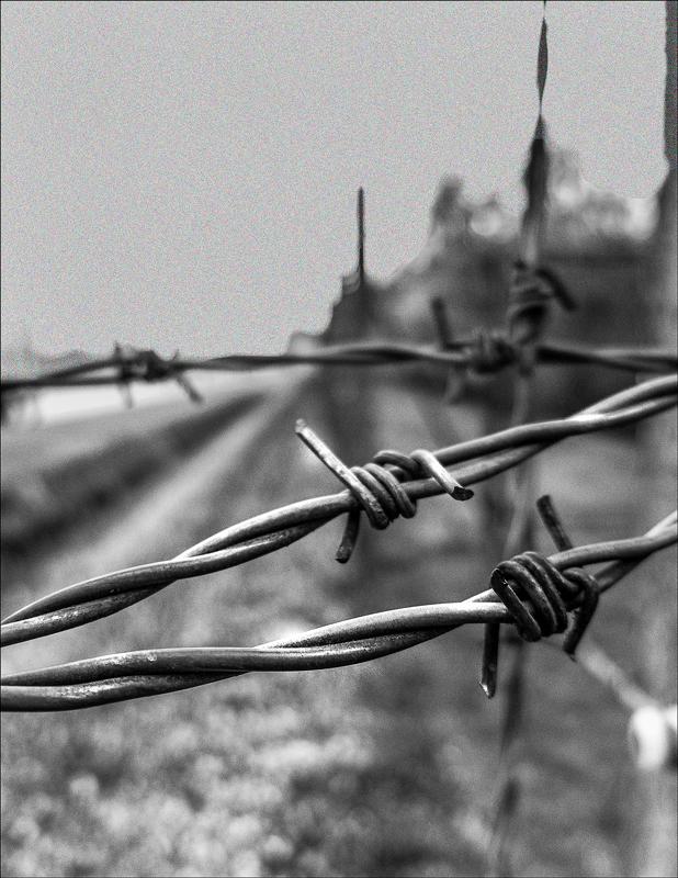 Dachau by Walt Hoffman