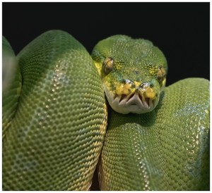 """Bob Reynolds - """"Green and Scaly"""""""