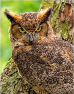 "Ken Olsen - ""Angry Bird"""
