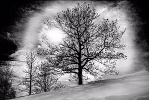 "Mort Lerman-""Winter Tree"""