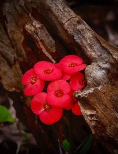 "Paula Matzek-""Brilliant Blossoms"""