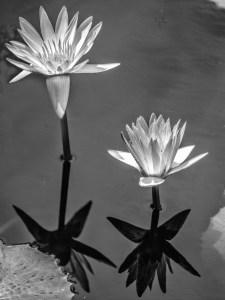 Reinhard-Schwind_Reflections