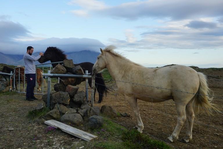 Caballos alrededor de la Ring Road hacia el oeste de la ruta por Islandia.