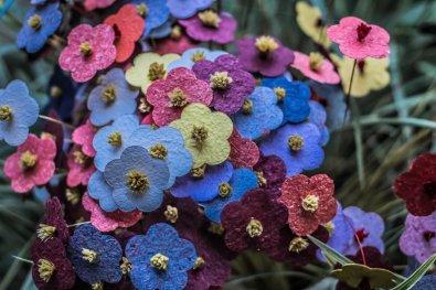 Temporada das Flores 06