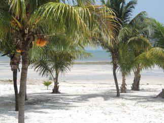 Between the palms . . . Grassy Key, Florida