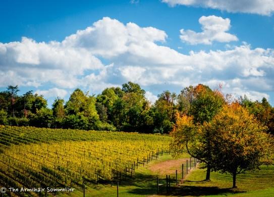 Vineyard View #1
