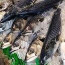 Du poisson sur un étal pret a être cuisiné