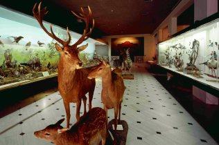 The Goulandris Museum