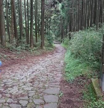 保護中: 6/1箱根旧東海道散策
