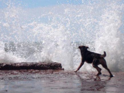 dog-barking-at-water-1571955