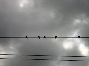 Dia-nublado