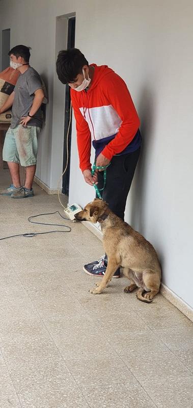 Totoras. El fin de semana se esterilizaron 46 mascotas.