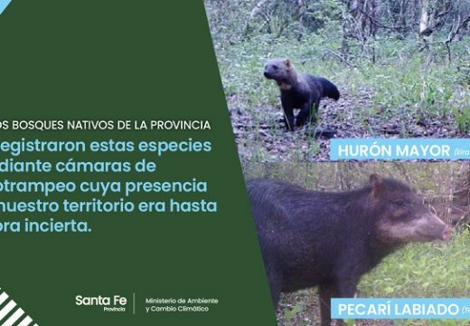 Se registraron dos especies animales nunca antes vistas en la provincia.