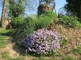 Thymus sp.
