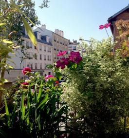 Clematis 'Ville De Lyon' Pittosporum tenuifolium 'Varieagatum'