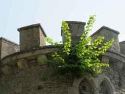 Château d'Epoisses 14