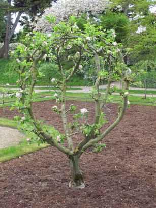 Jardin Albert Kahn (65)