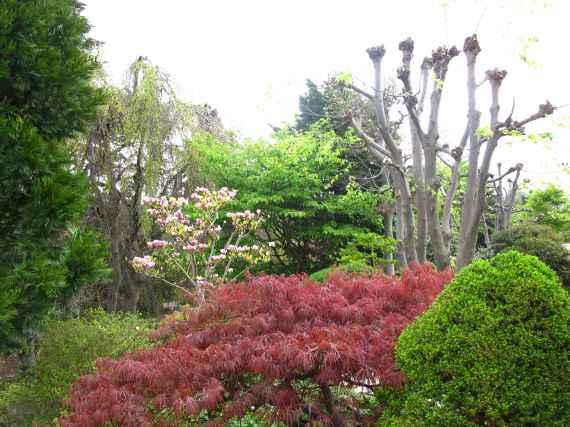 Jardin Albert Kahn (93)