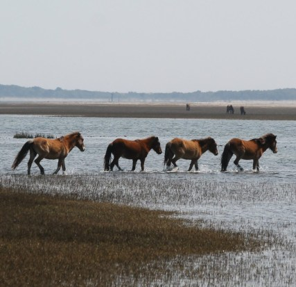 rachel_carson_reserve_wild_horses-e1536872225107