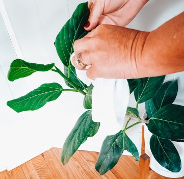 Top tips for indoor plant care