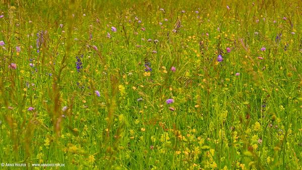 Wildblumenwiese bei Rheinstetten