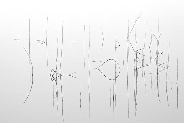 Schilf abstrakt