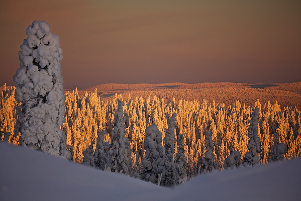 Winterlandschaft bei Vittjåkk - Arvidsjaur, Lappland, Schweden